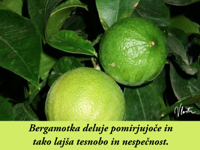 tesnoba naravna zdravila bergamotka