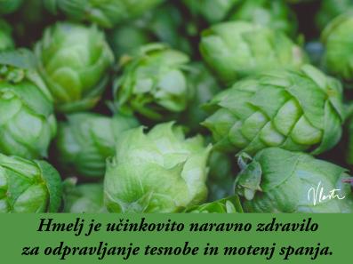 tesnoba naravna zdravila hmelj