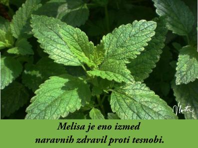 tesnoba naravna zdravila melisa